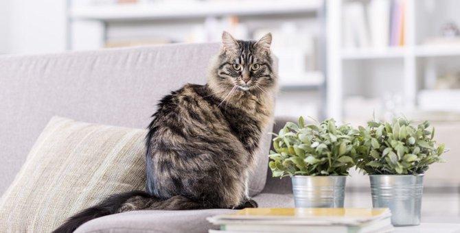猫のいる居住空間でやってはいけないこと5選