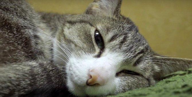 猫ちゃんが夢の世界へ遊びに行く瞬間を目撃♡