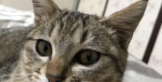 今では3匹に!保健所で小さく怯えていた子猫『茶々』をお迎えしてからの生活