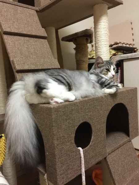 猫にキャットタワーを与える効果と選び方