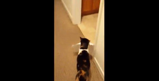 「印刷できたニャ!」ご主人に褒められたくてせっせと紙を運ぶ猫ちゃん