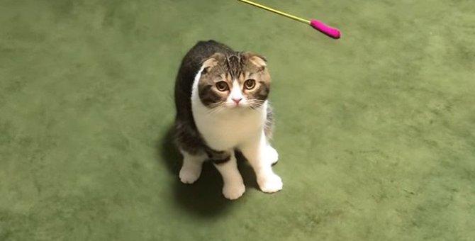 うぉー!元気いっぱいに遊び始めるぽこ太郎さん!