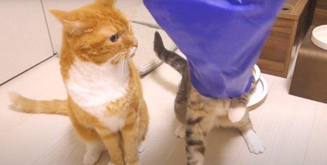 ハプニング発生!?袋にどうしても入りたい猫ちゃんが大パニック!