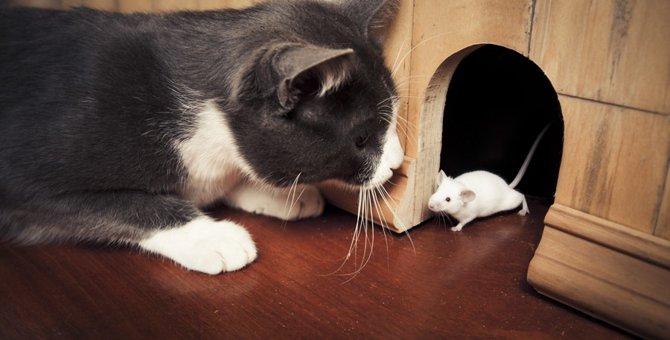 猫の音読みは「びょう」まつわる熟語や単語をご紹介