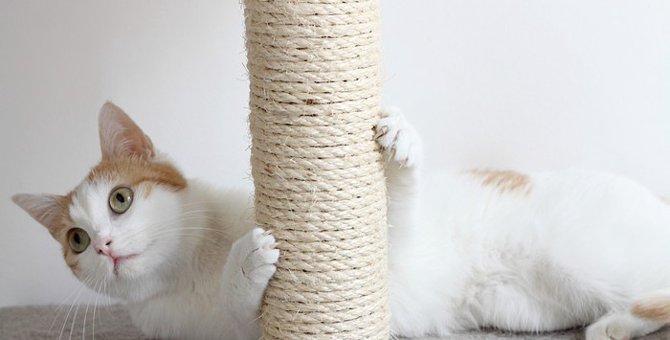 猫の叱り方において気をつけるべきこと