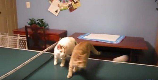 猫も人も楽しい♪猫さん一緒にする卓球がとっても楽しそう!