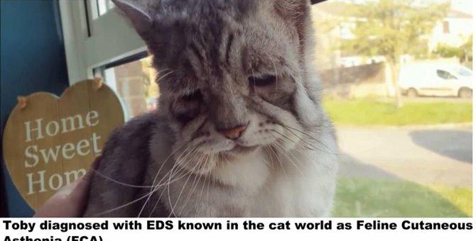 歯が1本もない猫とエーラス・ダンロス症候群の猫に一目ぼれしたカップル