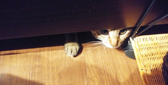 猫が『家具の下に隠れる』心理5つ。放っておいても大丈夫?
