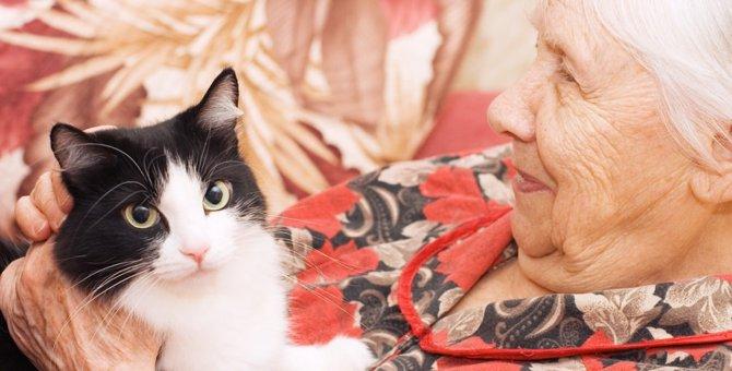 猫の年齢早見表!人間の年齢への換算とその成長の過程とは