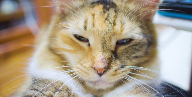 猫が冷たい態度をするのはなぜ?猫が飼い主さんに冷める瞬間4つ