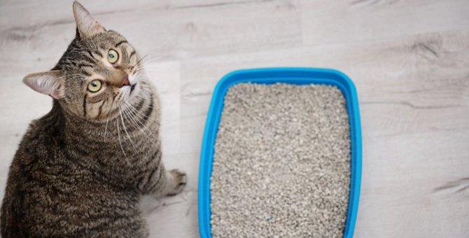 使用後の猫砂がキラキラしている時に考えられる理由3つ