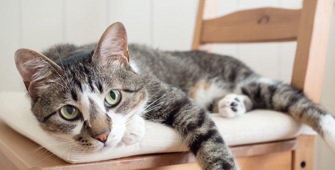 猫が『ウザいなぁ』と感じている時のサイン4つ