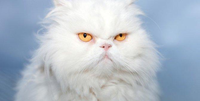 ブサカワな猫の種類12選