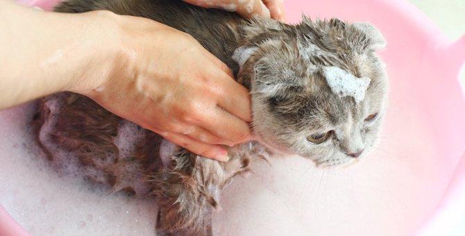 どうやって猫をお風呂に入れる?どうしてもできない時の対処法も