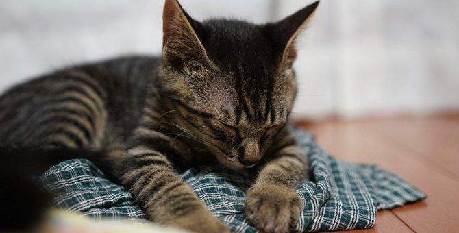 猫が寒い所で眠るのは病気のサイン!?注意したい5つの事