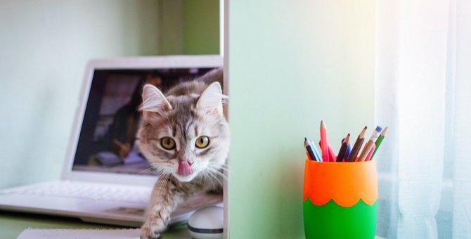 猫が家の中で虫を食べてしまったら!?体への影響はあるの?