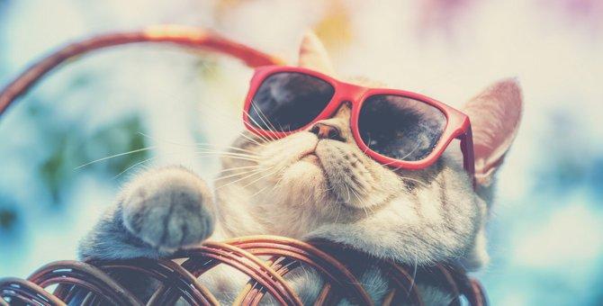 夏に多い『猫の危険な病気』3つと予防策