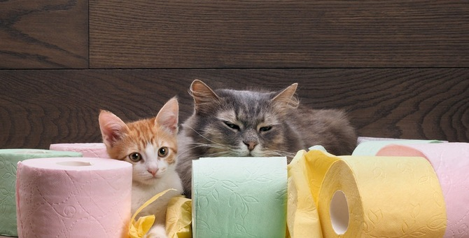 上から猫トイレとは~お勧めのポイント~