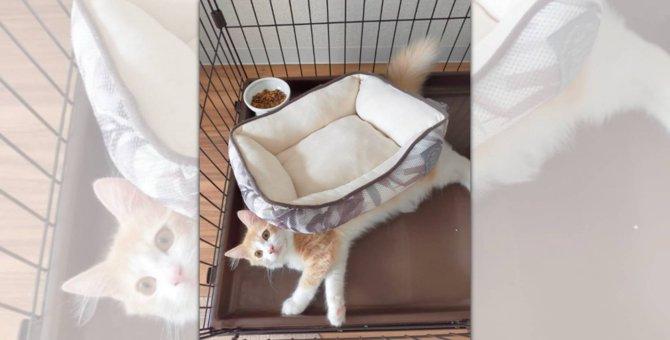 「違う違う、そうじゃない」ベッドの使い方が個性的な猫さんが話題