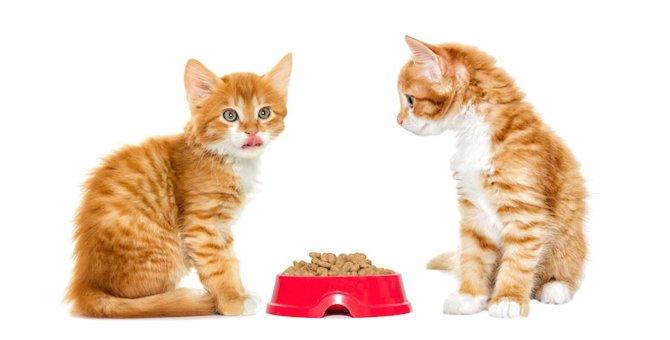 3ヶ月の子猫の体重と餌の与え方