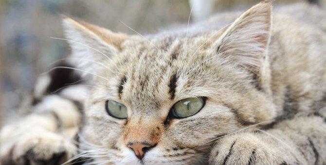 猫が『無視する』ときに考えられること4つ
