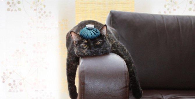猫の『熱中症』を早期発見する方法4つと予防法