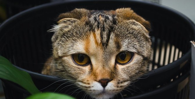 猫がゴミ箱をあさるときの心理5つ