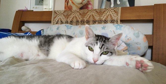 猫と『初対面でも好かれる人』に共通すること5つ