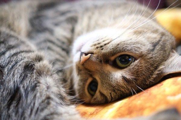 猫が飼い主に『同情』するシチュエーション