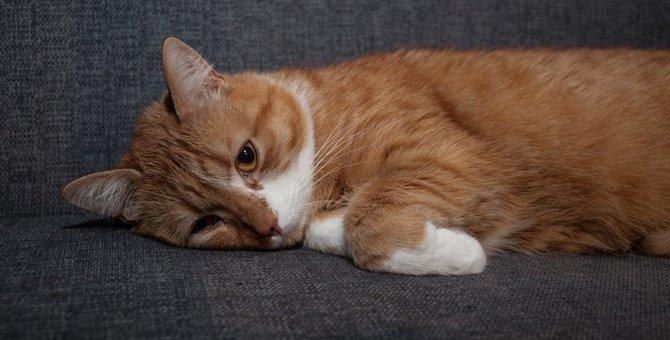 猫の足取りがふらふらして見える時の理由5つと対処法