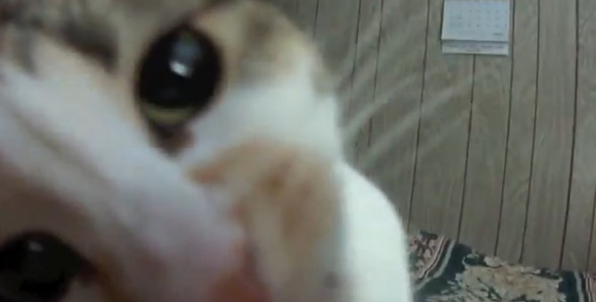 静止画より動画派なの!カメラに向かって大サービスな猫ちゃん