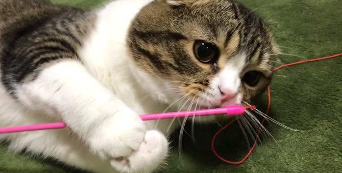 おもちゃじゃなくてそっち?棒が気に入った猫さん!