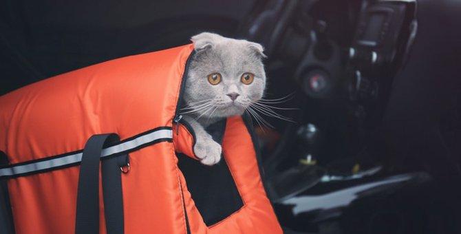 猫とお出かけする時の注意事項とおすすめスポット