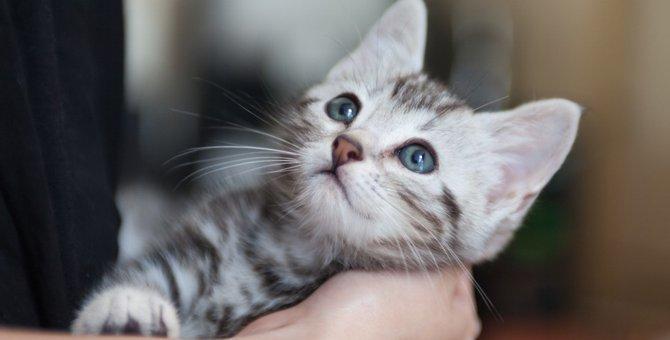 猫を飼うのに必要なもの7選と準備しておくこと