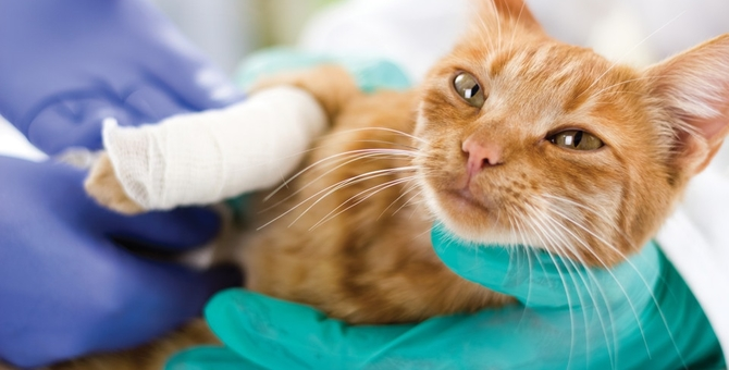 猫が吐く時の危険な症状や考えられる病気