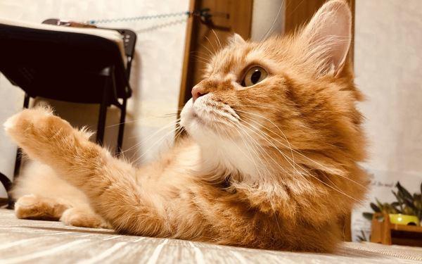 気分屋?猫の気分がコロコロ変わってしまう理由3つ