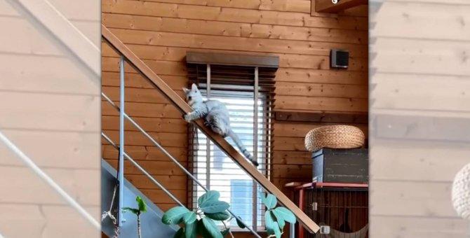 階段の降り方のくせが強すぎる「猫さん」よい子はマネしないでね!