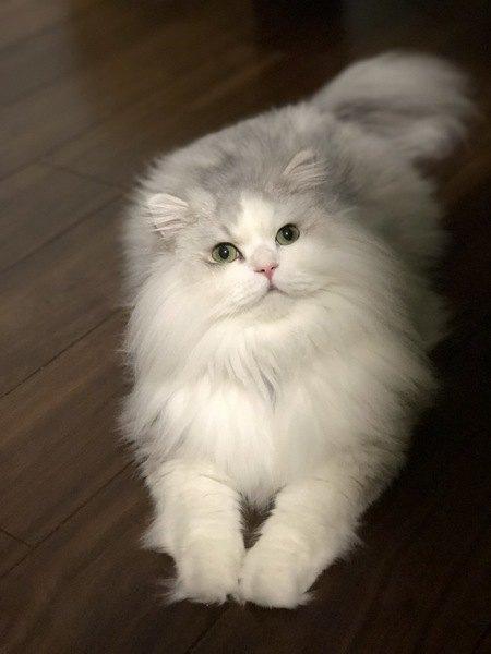 猫の毛を『ふわふわ』にする方法5つ