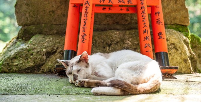 猫が行方不明になったら行きたい神社、試したいおまじない
