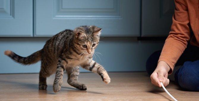 もっと愛猫と遊ぼう!猫が楽しくなっちゃう7つの遊び方