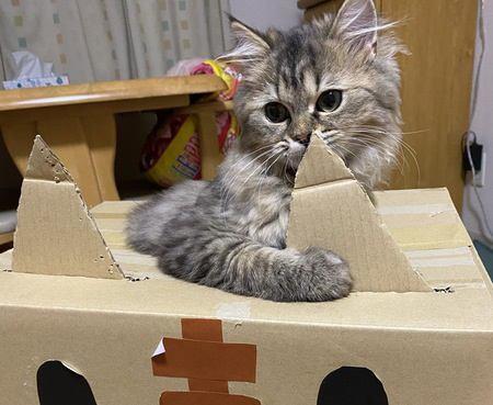 猫が執着しがちなもの5つ