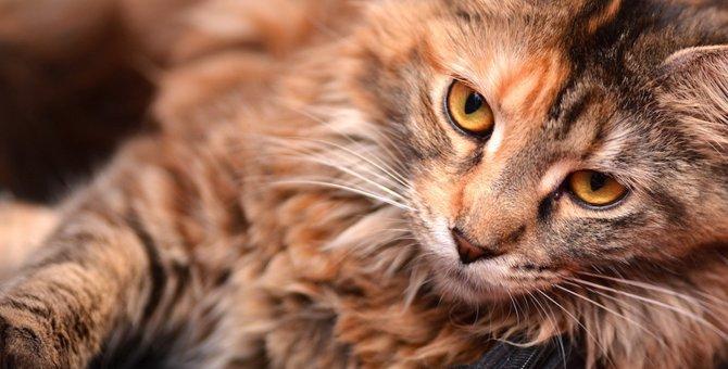 猫の毛並みについて解説!健康状態やふわふわにする方法
