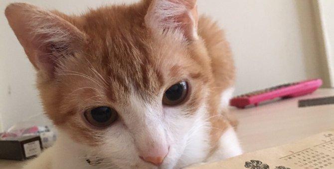 怖がりで飼い主以外の人に心を開かない愛猫「セナ」の問題行動