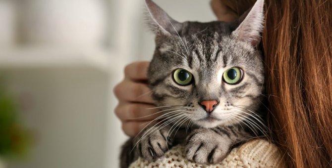 猫の飼い主が『ノイローゼ』になる原因5つと予防策
