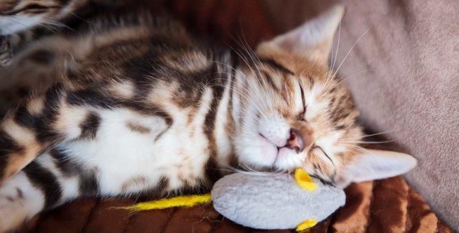 猫と遊ぶのに『最適』なタイミングって?
