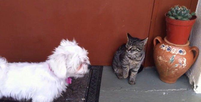 猫パンチが効かないなんて…!華麗な身のこなしをする犬に唖然とする猫