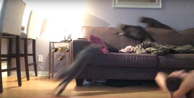 スヤスヤ寝てた猫ちゃんたち、この後目にも止まらなぬ早さで逃げる!
