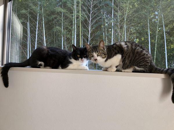 猫のテンションがあがるもの7つ