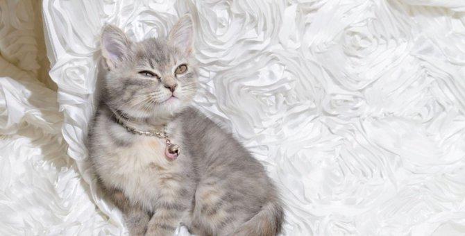 オーストラリアンミストの特徴や性格。まるで猫界の大理石!