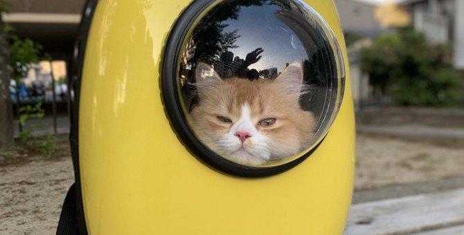 猫にすんなり『キャリーバッグ』に入ってもらう方法5つ